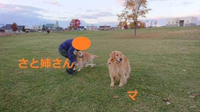 IMG_4484_20191027212451bf4.jpg