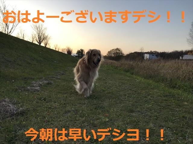 IMG_4519_PPP.jpg