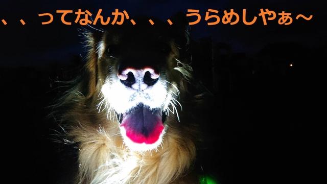 IMG_4537.jpg