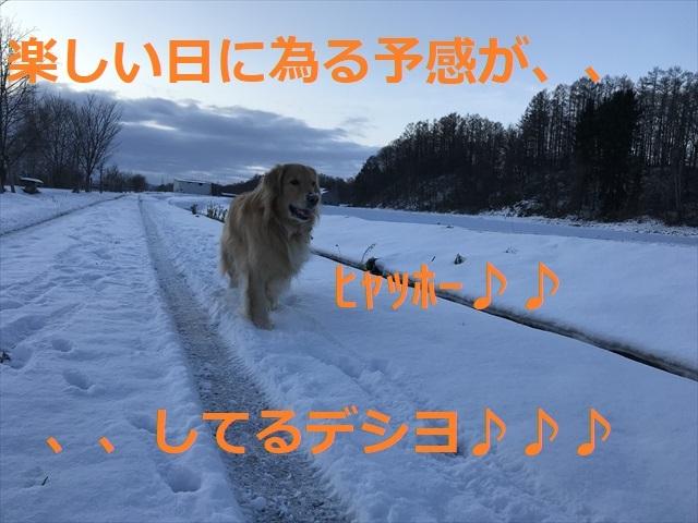 IMG_5100_PPP.jpg