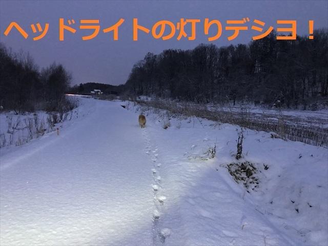 IMG_5478_PPP.jpg