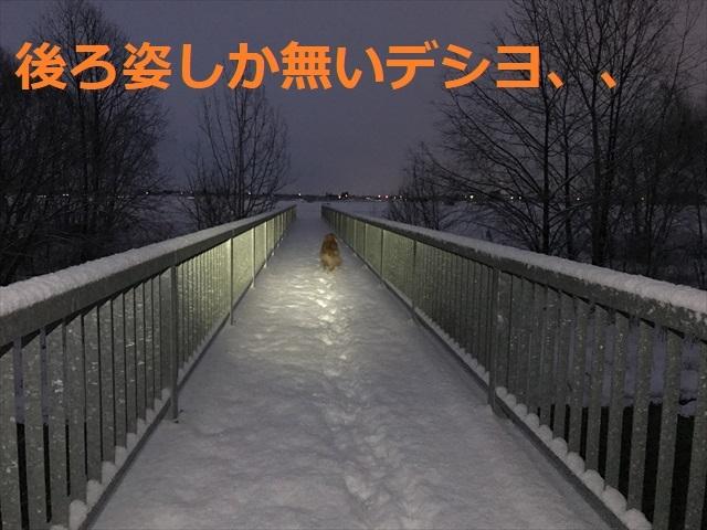 IMG_5481_PPP.jpg