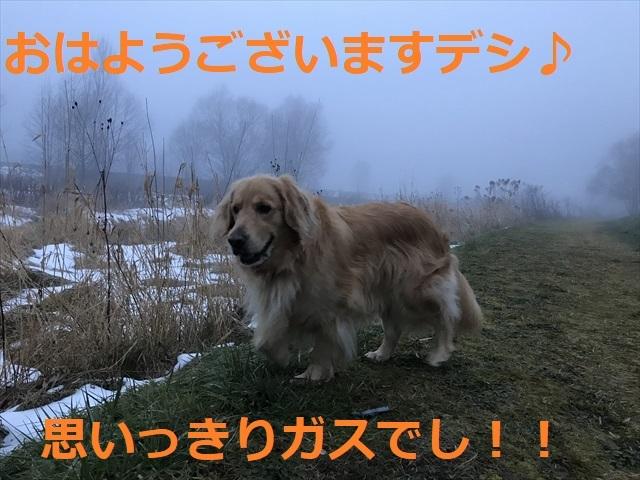IMG_5537_PPP.jpg