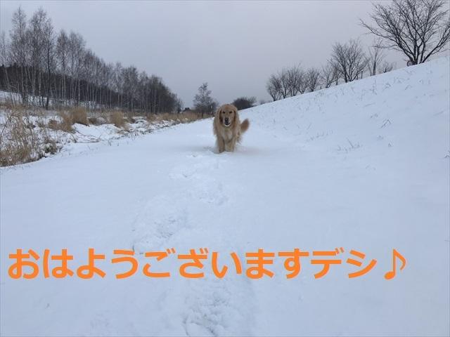 IMG_5558_PPP.jpg