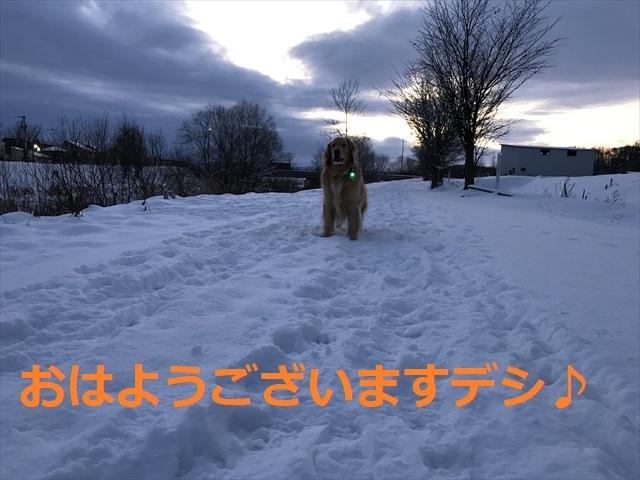 IMG_5590_PPP.jpg