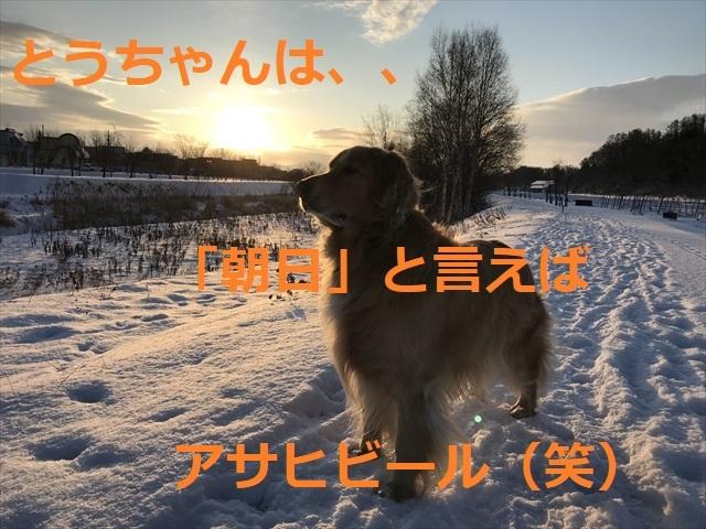 IMG_5608_PPP.jpg