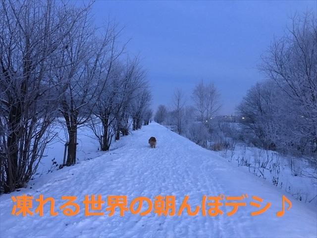 IMG_6085_PPP.jpg