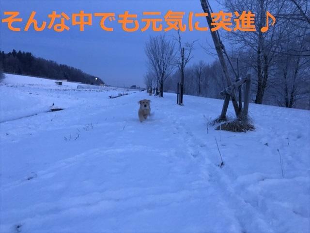 IMG_6086_PPP.jpg