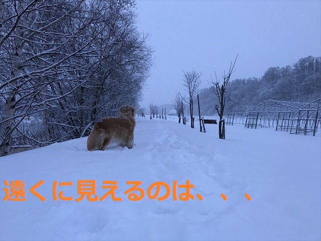 IMG_6153_PPP.jpg