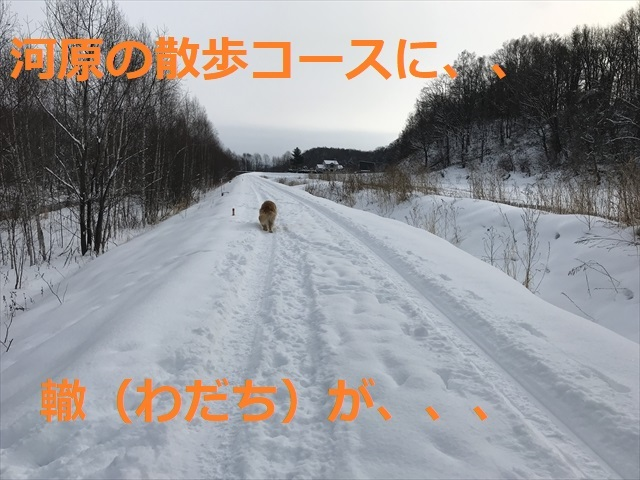 IMG_6189_PPP.jpg