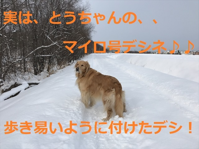 IMG_6194_PPP.jpg