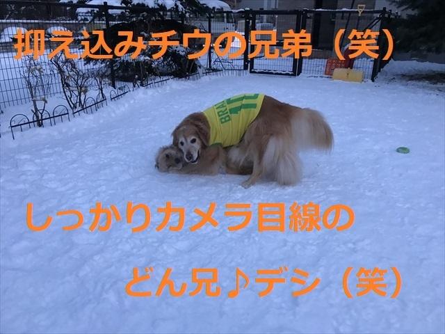 IMG_6208_PPP.jpg