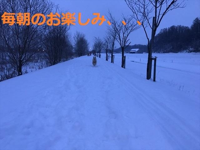 IMG_6224_PPP.jpg