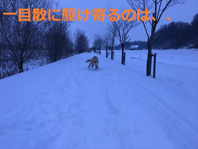 IMG_6225_PPP.jpg