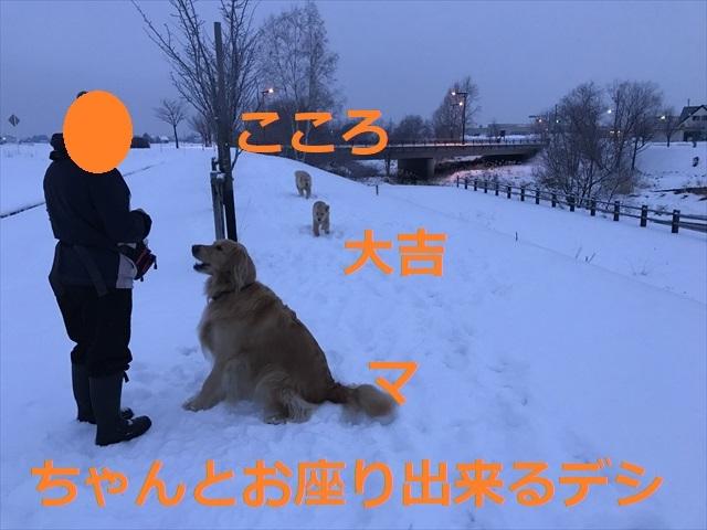 IMG_6230_PPP.jpg