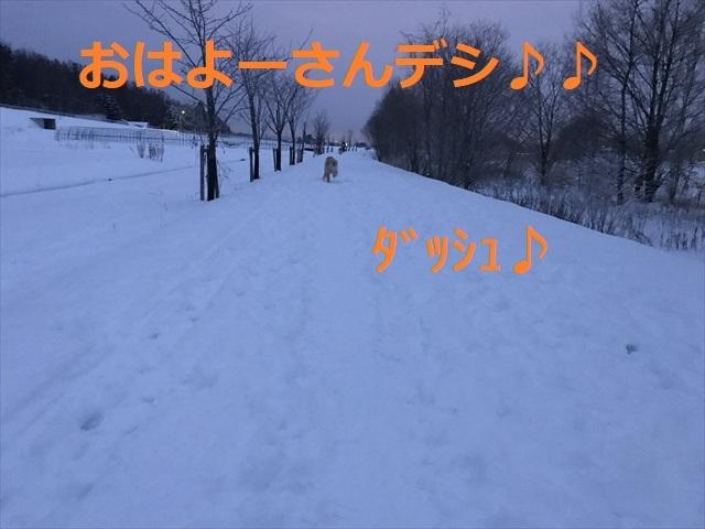 IMG_6247_PPP.jpg