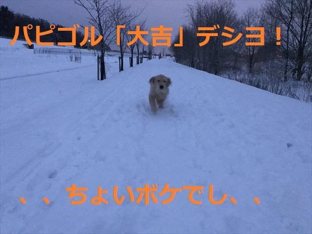 IMG_6249_PPP.jpg