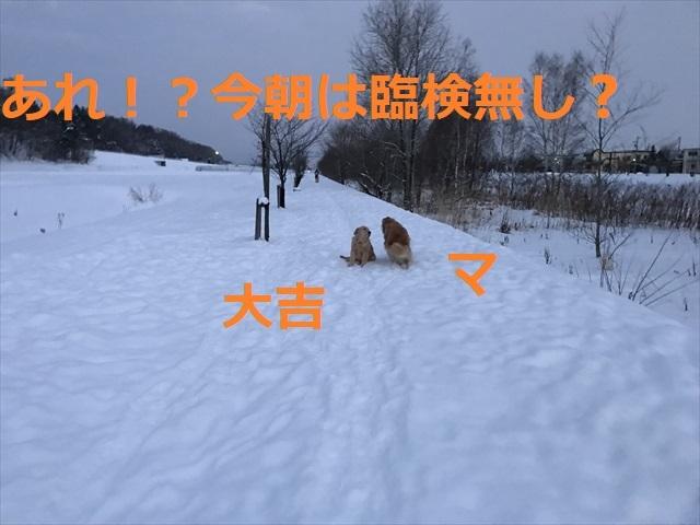 IMG_7351_PPP.jpg