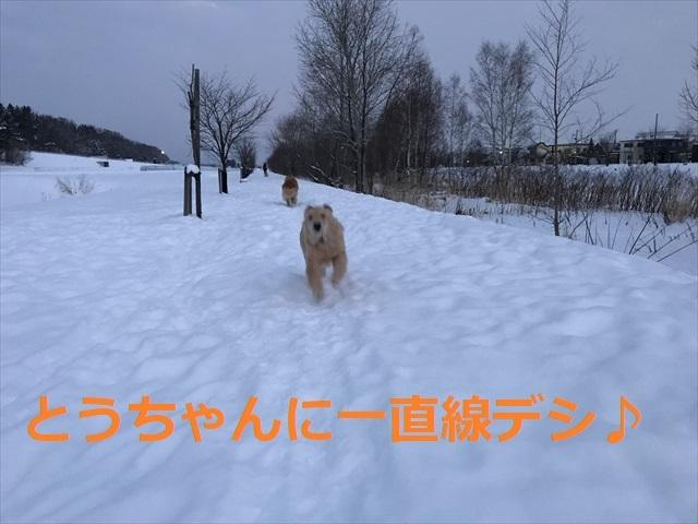 IMG_7353_PPP.jpg