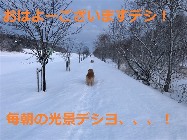 IMG_7385_PPP.jpg