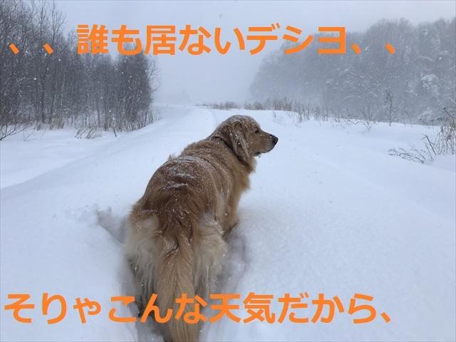 IMG_7467_PPP.jpg