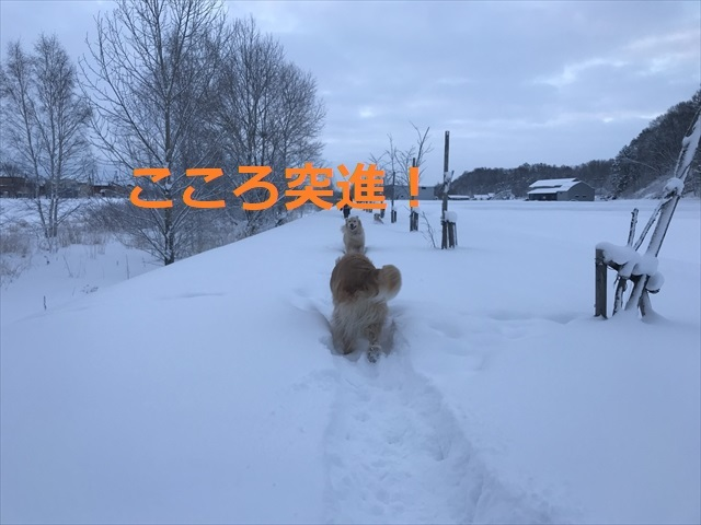 IMG_7552_PPP.jpg