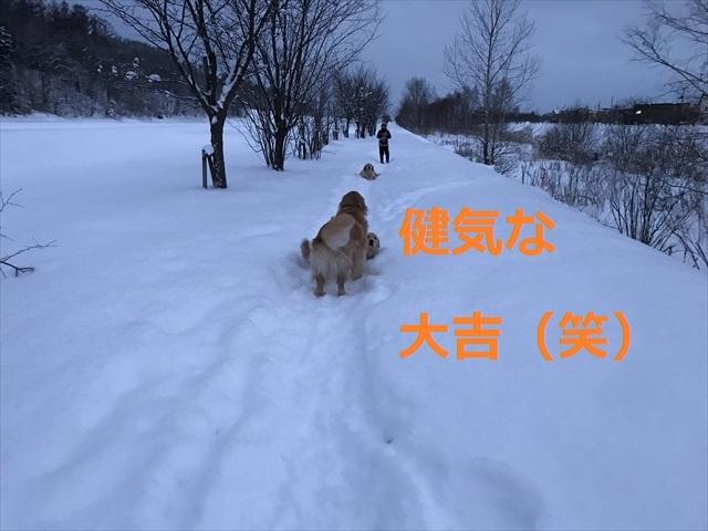 IMG_7672_PPP.jpg