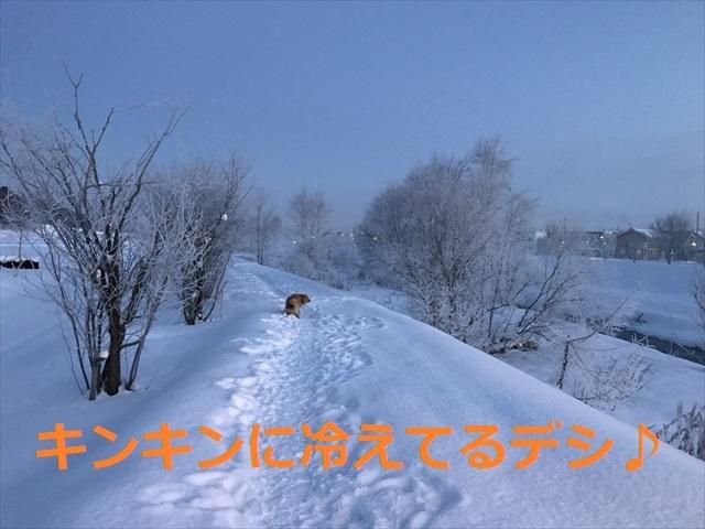 IMG_7703_PPP.jpg