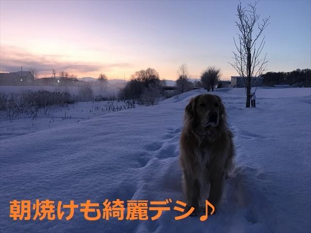 IMG_7706_PPP.jpg