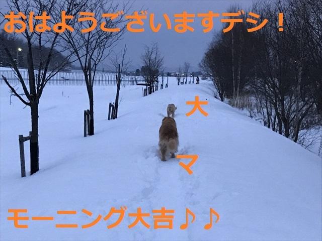 IMG_7759_PPP.jpg