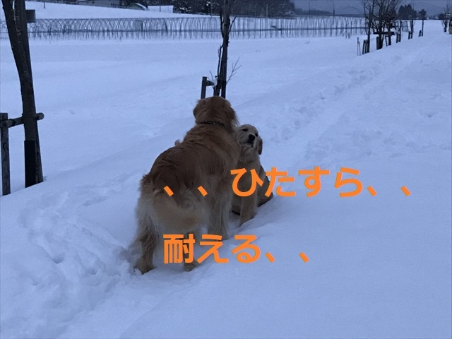 IMG_7763_PPP.jpg