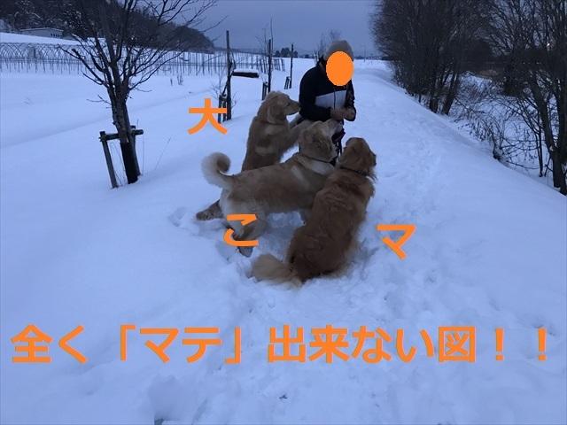 IMG_7769_PPP.jpg