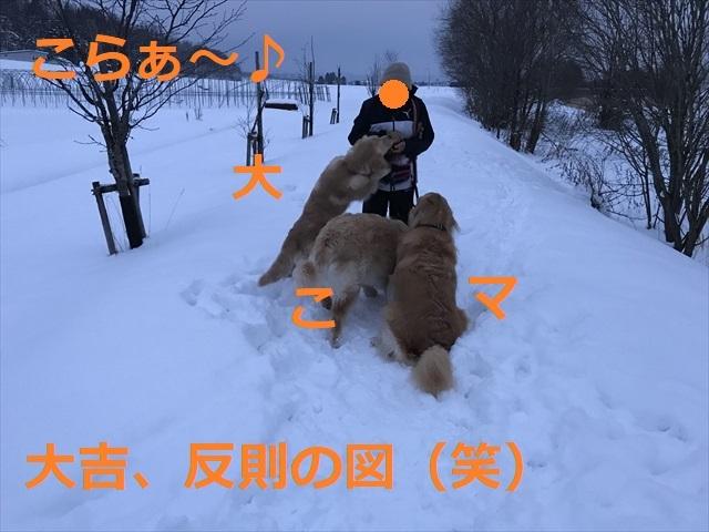 IMG_7774_PPP.jpg