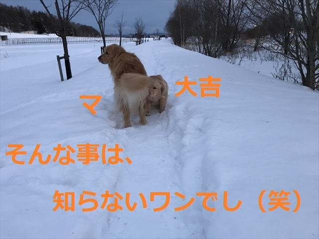IMG_7783_PPP.jpg