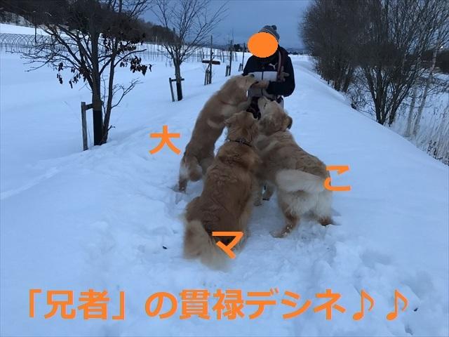 IMG_7795_PPP.jpg