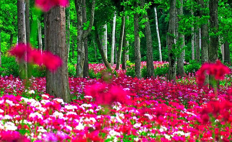 全国で人気&おすすめの植物園花の森・四十八滝山野草花園