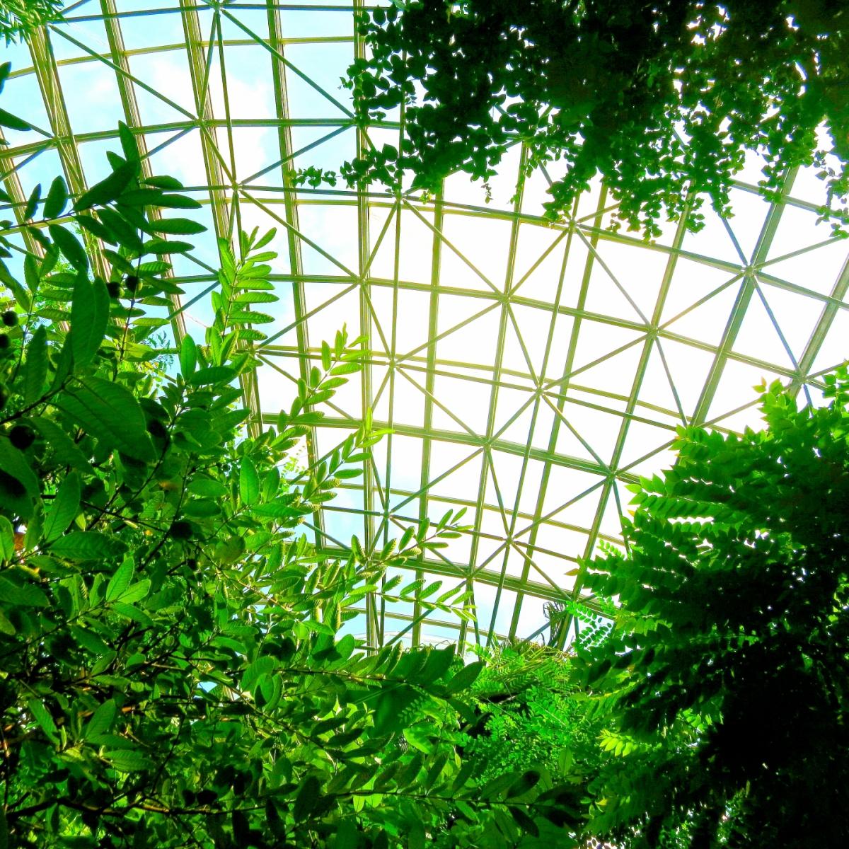おすすめ!一度は行ってみたい全国で人気の植物園9選
