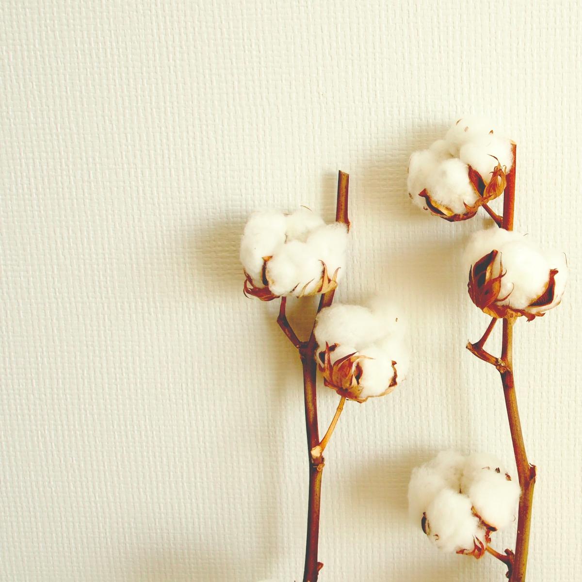 インテリアに!綿の実・わたの木・コットンフラワーの飾り方&リース