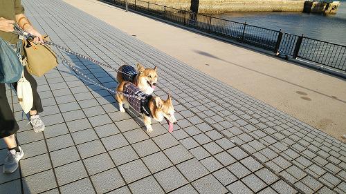 散歩開始~