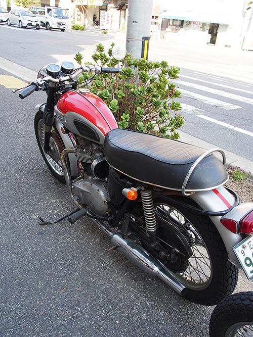 PA300020.jpg