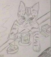 名古屋の老猫
