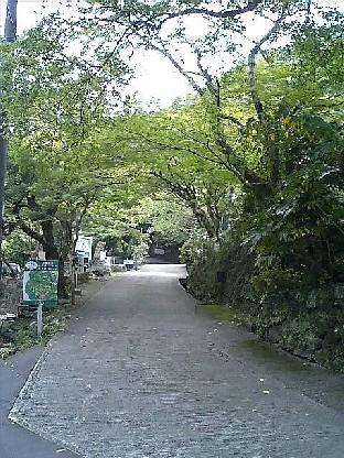 https://blogs.yahoo.co.jp/IMG/ybi/1/24/4d/rumiko_01/folder/696321/img_696321_36066692_0?20060519093626.jpg