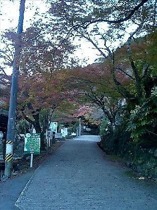 https://blogs.yahoo.co.jp/IMG/ybi/1/24/4d/rumiko_01/folder/696321/img_696321_36066692_3?20060519093626.jpg