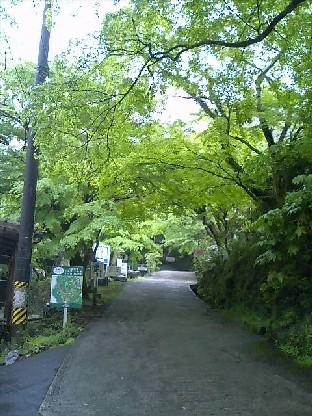 https://blogs.yahoo.co.jp/IMG/ybi/1/24/4d/rumiko_01/folder/696321/img_696321_36066692_6?20060519093626.jpg