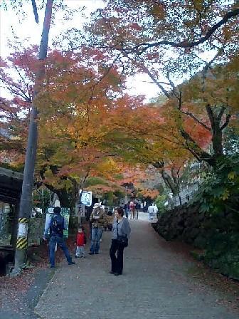 https://blogs.yahoo.co.jp/IMG/ybi/1/24/4d/rumiko_01/folder/696321/img_696321_43872851_0?2006-11-28
