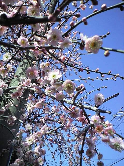 https://blogs.yahoo.co.jp/IMG/ybi/1/24/4d/rumiko_01/folder/696321/img_696321_58515173_0?1235010156