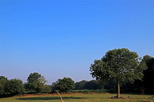 リュセルヌ・ドゥトゥルメール修道院への途中の風景 木々