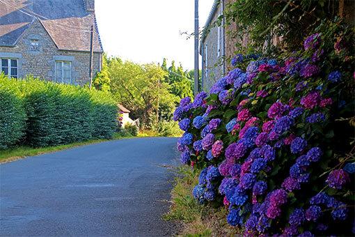 リュセルヌ・ドゥトゥルメール修道院への道 あじさい咲く道