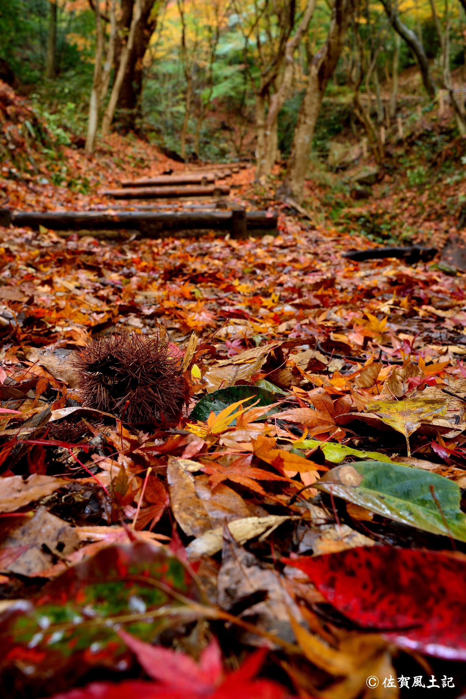 落葉の絨毯:DSC_6270