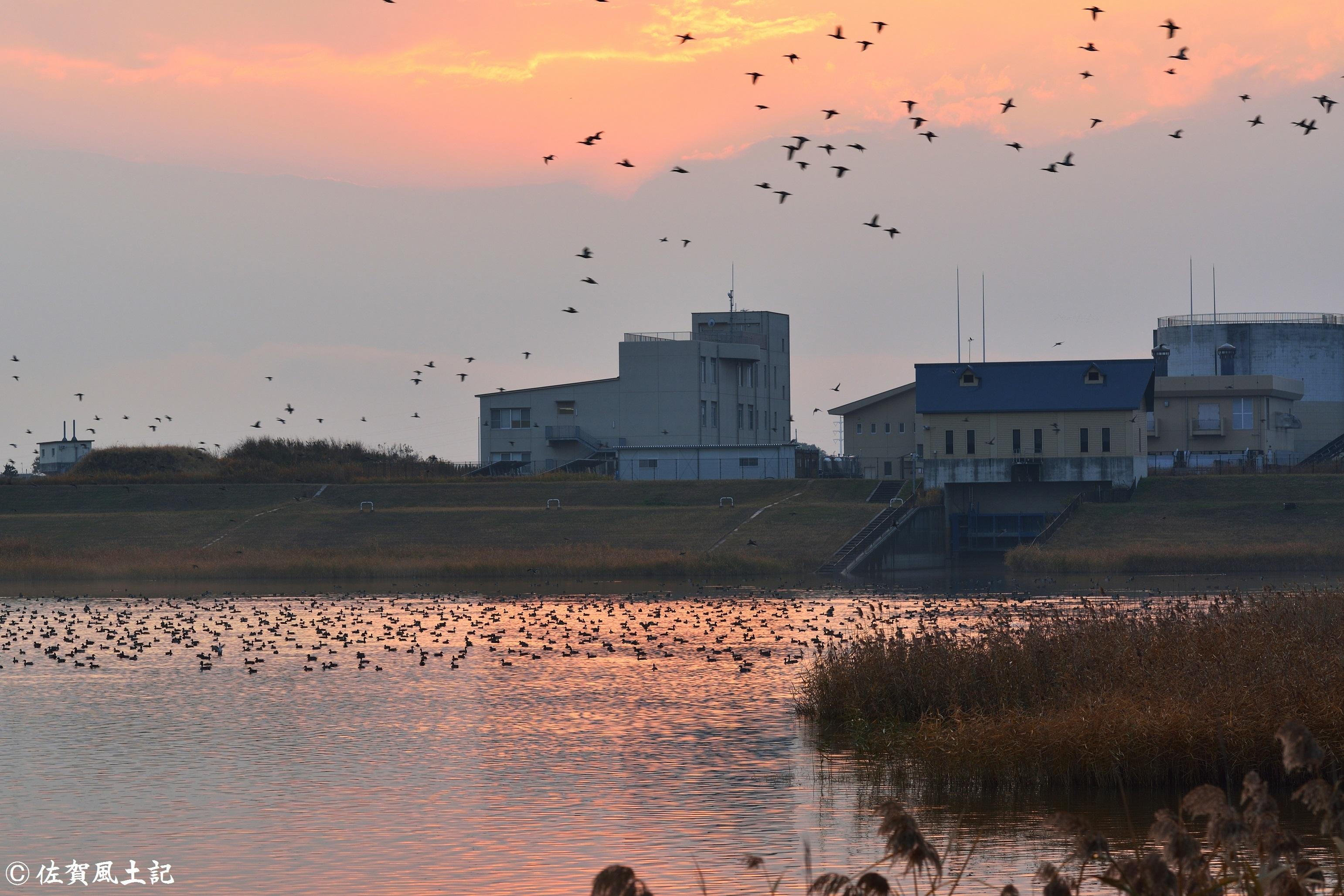 縄文の湖渡り鳥